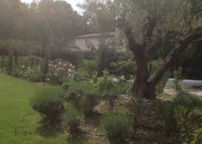 Elagage par BGP Paysagiste vers Avignon